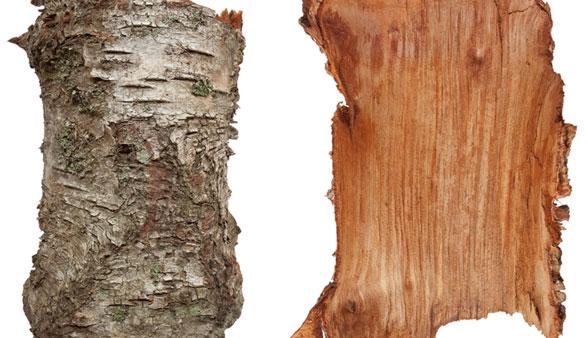 lubje od breze