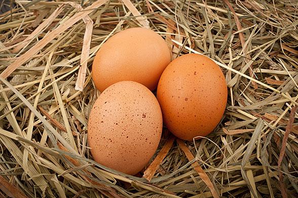 Kokošja jajca