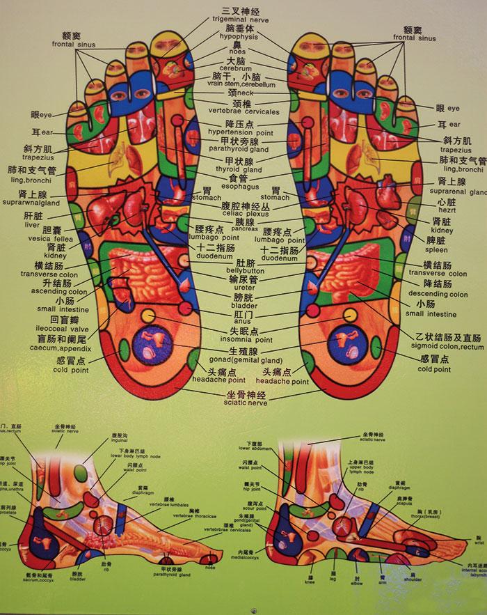 Refleksoterapija - zemljevid stopal