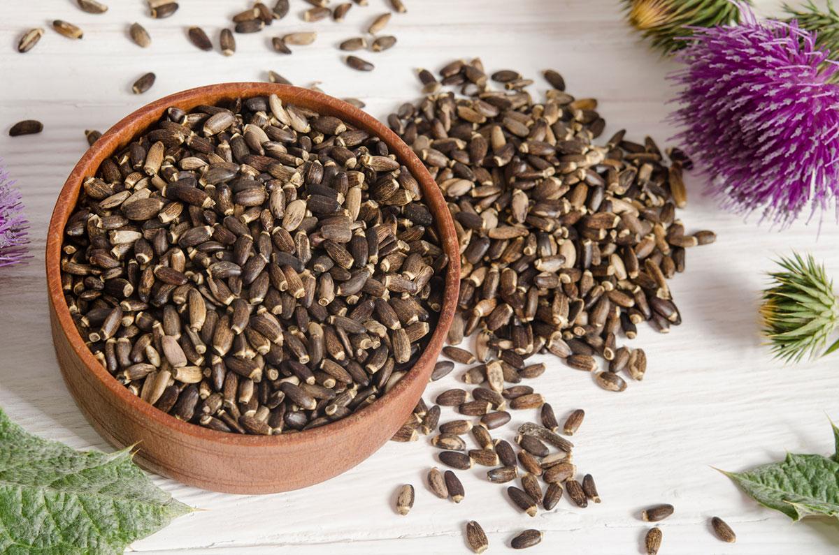 Pegasti badelj semena silimarin