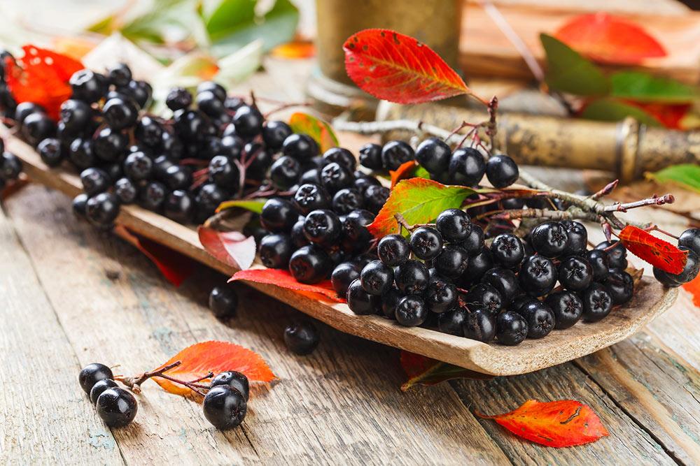 Aronija plodovi - jagode